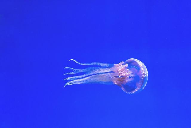 Aquarium blue exotic.