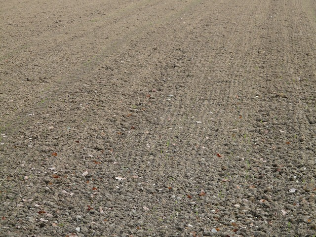 Arable ground agriculture.