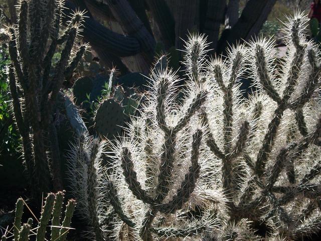Arizona backlit cactus, nature landscapes.