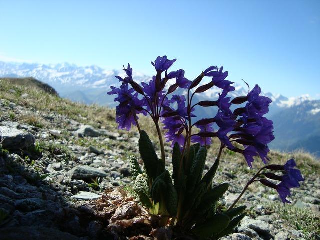 Arkhyz mountains flowers.