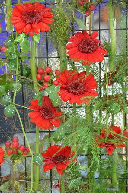 Arrangement flowers red, nature landscapes.