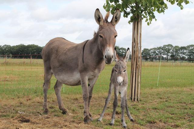 Ass foal pet, animals.