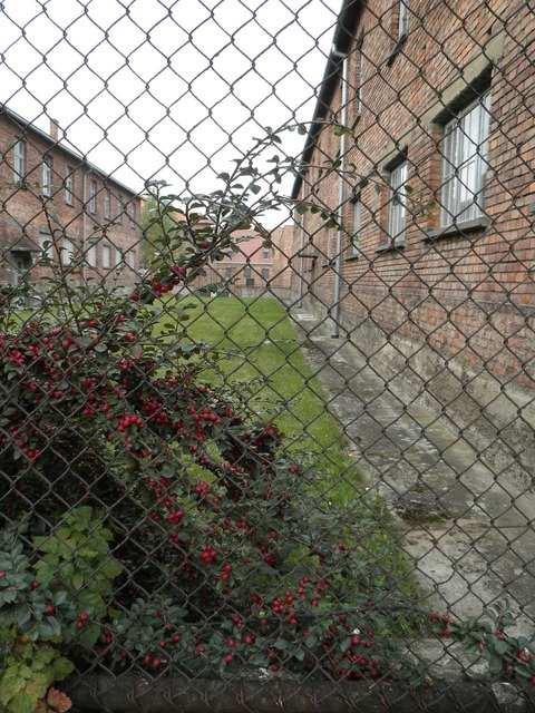 Auschwitz concentration camp barak.