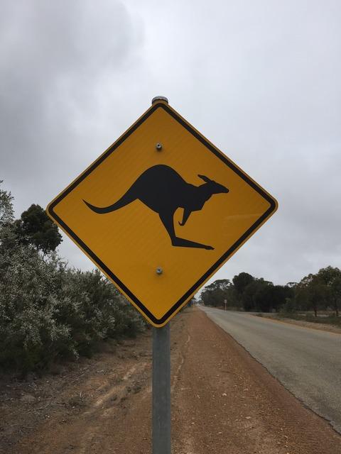 Australia kangaroo road, transportation traffic.
