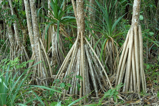 Australia mangroves plant, nature landscapes.
