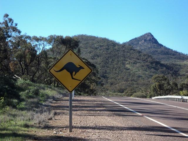 Australia road kangaroo, transportation traffic.