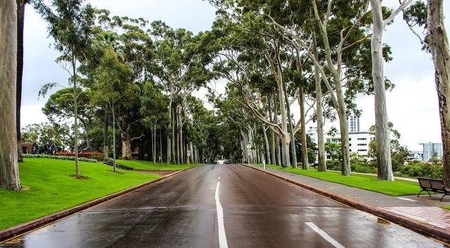 Australia street trees, transportation traffic.