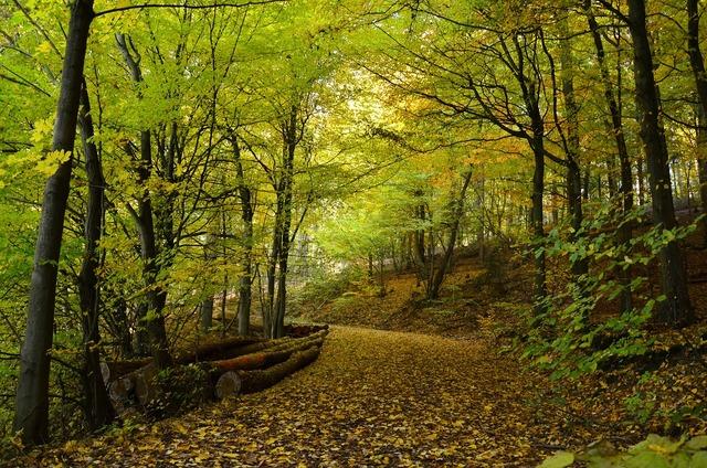 Autumn autumn forest forest, nature landscapes.