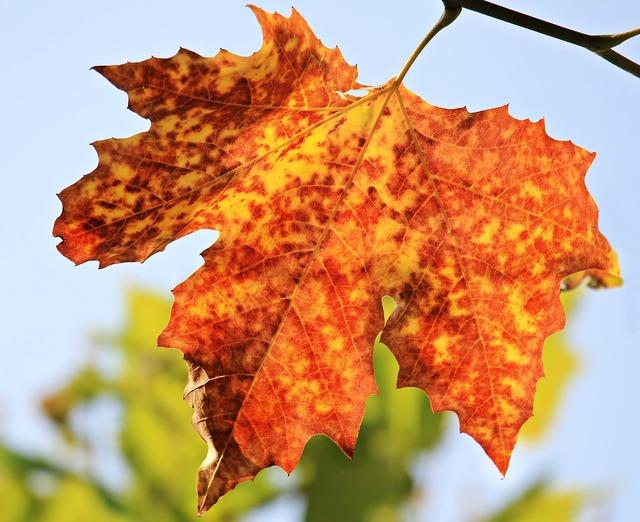 Autumn autumn leaf leaves, nature landscapes.