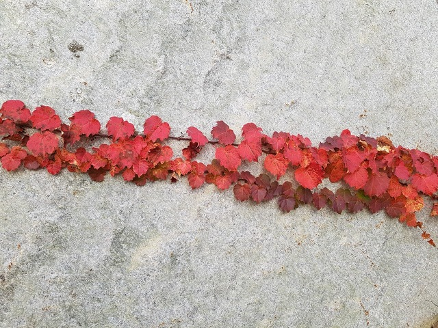 Autumn autumn leaves nature, nature landscapes.