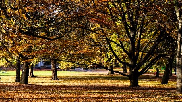 Autumn autumn mood autumn forest.