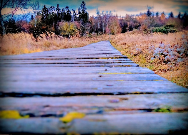 Autumn away wooden track, nature landscapes.