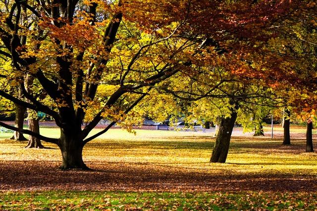 Autumn color colorful leaves.