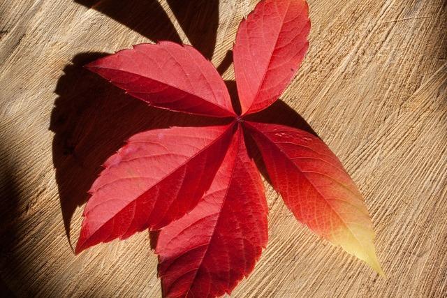 Autumn fall foliage golden autumn, backgrounds textures.