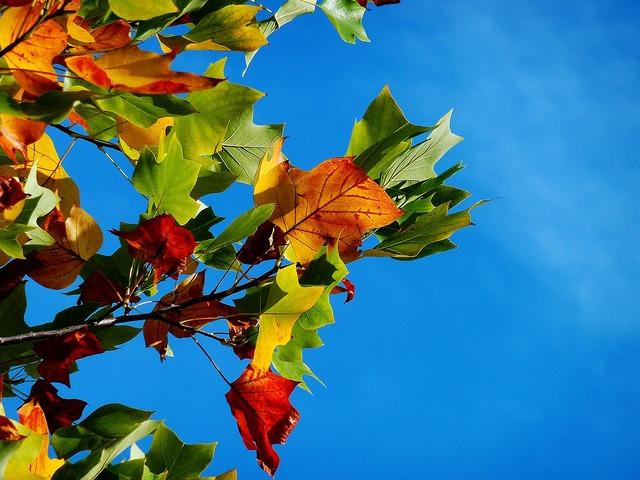 Autumn fall leaves leaves.