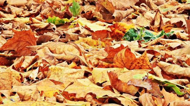Autumn fall leaves leaves, nature landscapes.