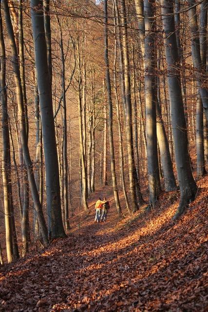Autumn forest forest autumn, nature landscapes.