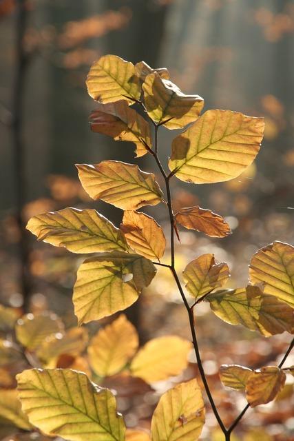 Autumn forest leaves, nature landscapes.
