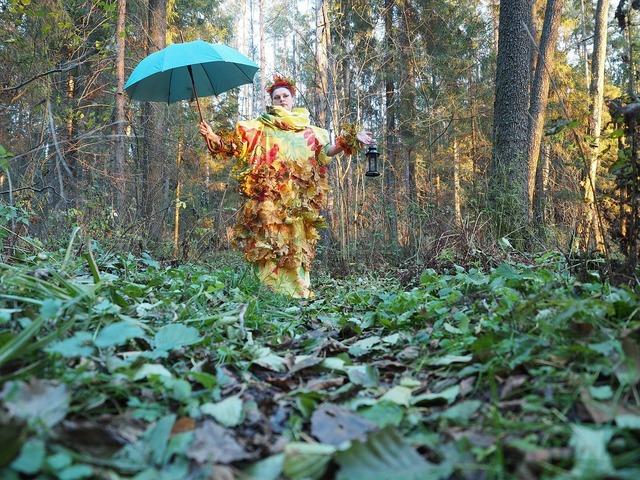 Autumn forest nature, nature landscapes.