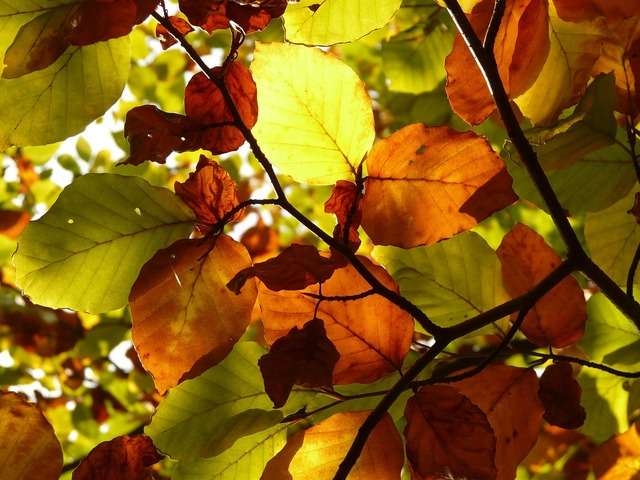 Autumn forest tree, nature landscapes.