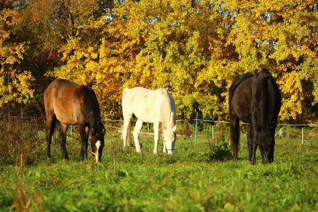 Autumn horse thoroughbred arabian.