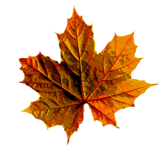 Autumn leaves color, nature landscapes.