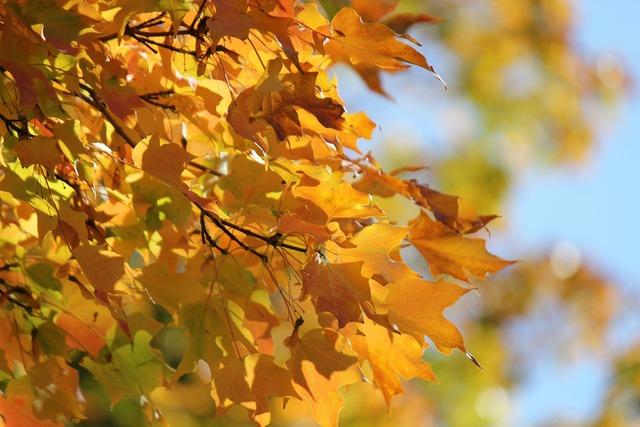 Autumn leaves fall leaves.