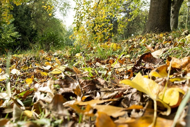 Autumn leaves forest floor, nature landscapes.