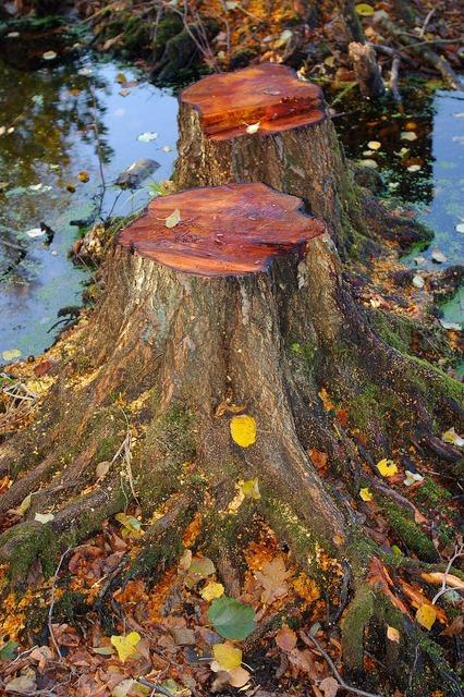 Autumn leaves forest, nature landscapes.