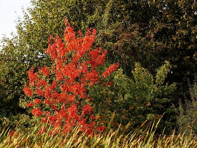 Autumn leaves tree, nature landscapes.