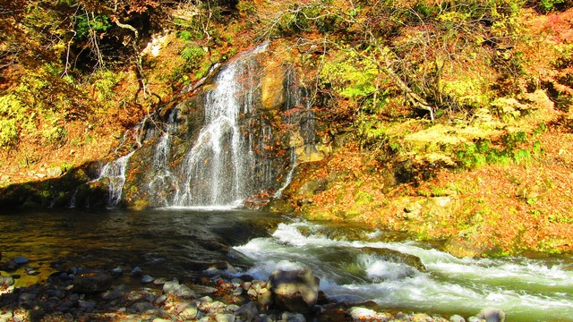 Autumn maple maple leaf, nature landscapes.