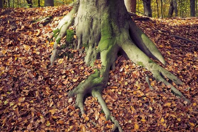 Autumn nature landscape, nature landscapes.