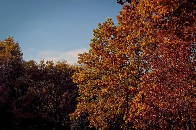 Autumn nature trees, nature landscapes.
