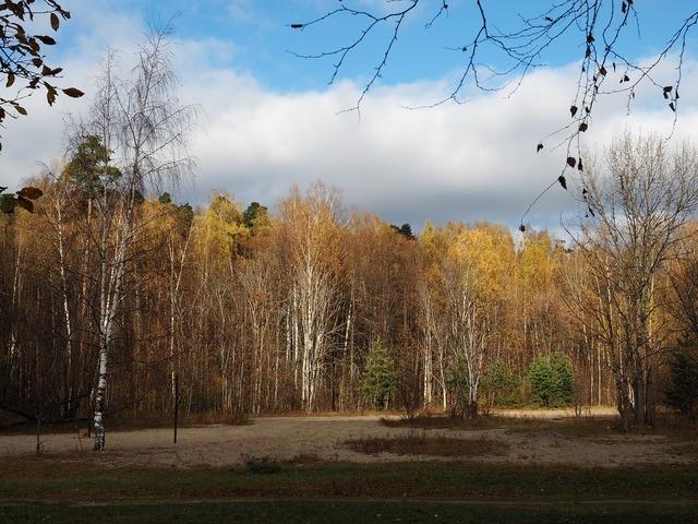 Autumn park photo, nature landscapes.