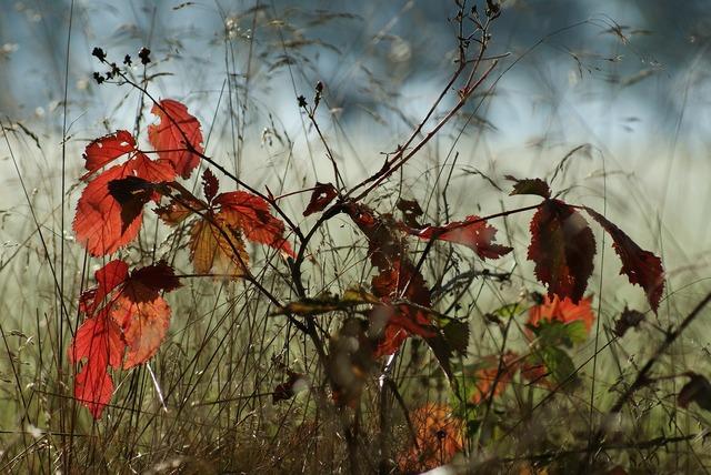 Autumn tree smaller tree, nature landscapes.