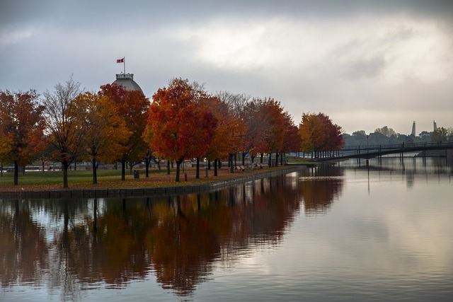 Autumn trees reflections.