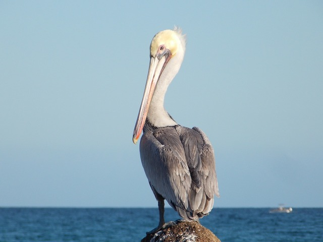 Ave pelican beach, travel vacation.
