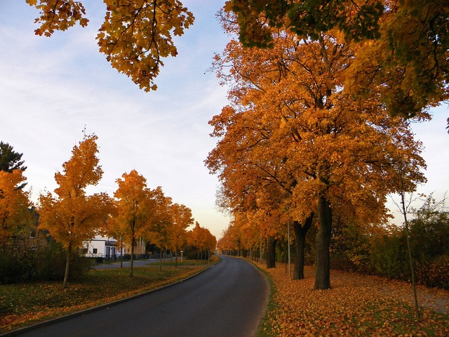 Avenue autumn landscape trees, transportation traffic.