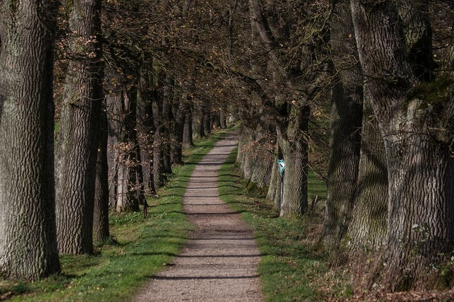 Avenue on both sides by trees limited, nature landscapes.