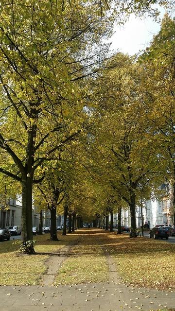 Avenue park altona.