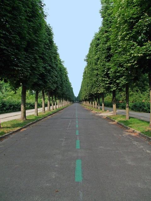 Avenue tree lined avenue road, transportation traffic.