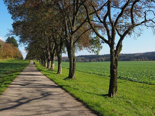 Avenue trees away, transportation traffic.