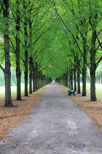 Avenue trees park.