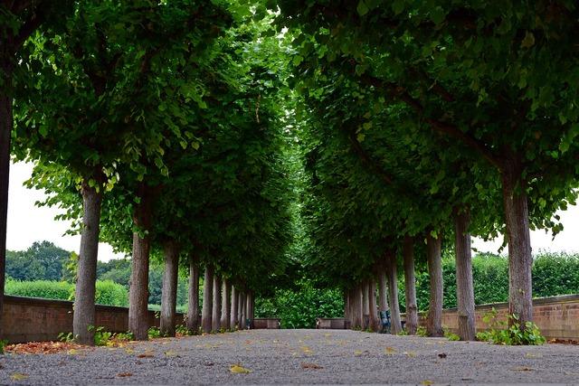 Avenue trees park, nature landscapes.