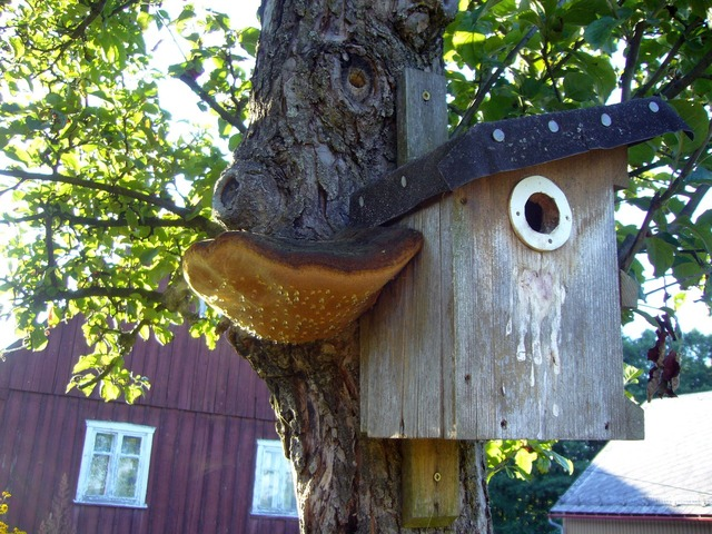 Aviary bird mushroom, animals.