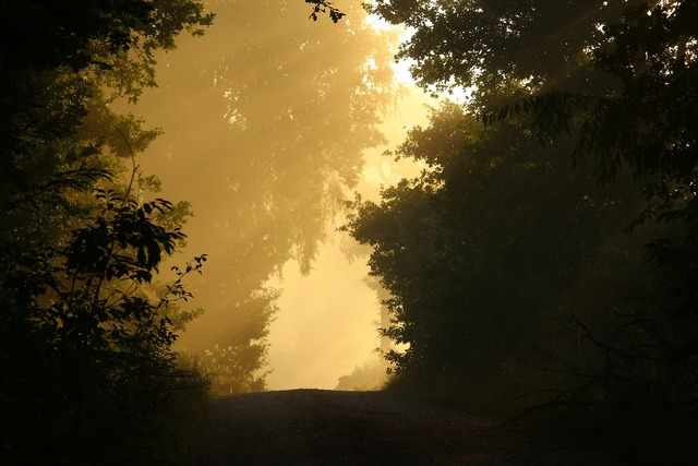 Away fog trees, nature landscapes.