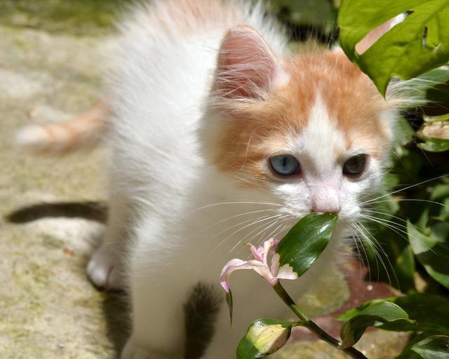 Awesome beautiful blue eyes, emotions.
