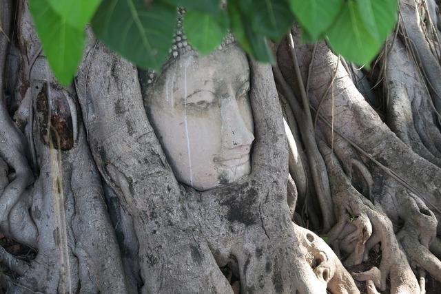Ayutthaya thailand buddha, religion.