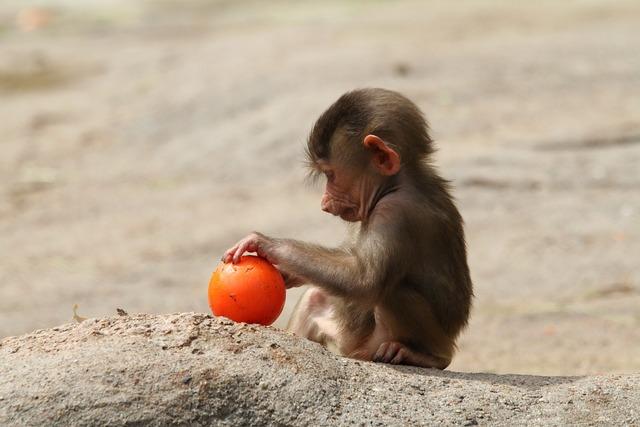 Baboon baby baboon playing baboon.