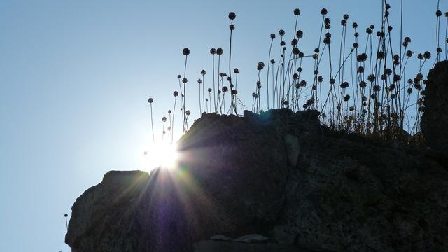Back light silhouette plant, nature landscapes.
